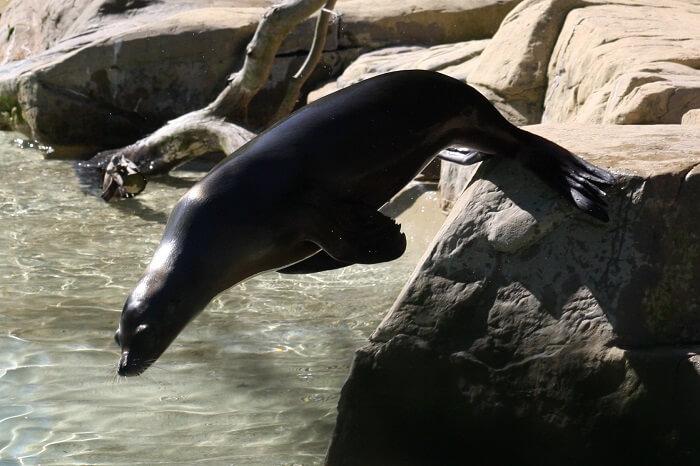 seals at The National Zoo, Washington, DC