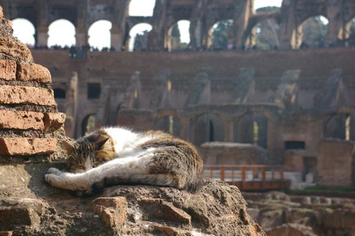 the-roman-cat-sanctuary