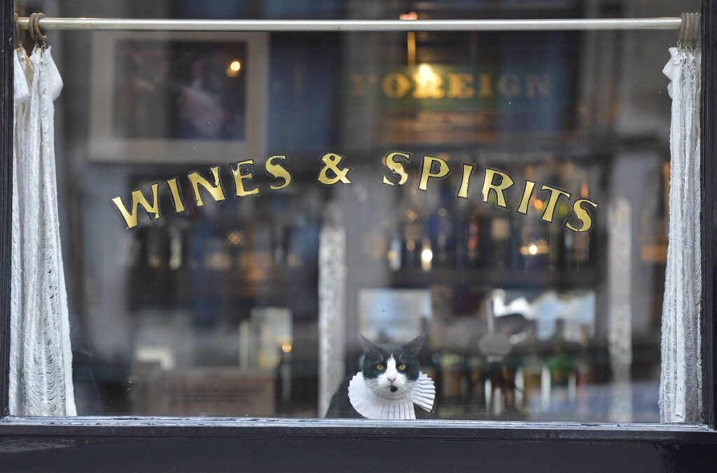 A cat watches passers-by from a pub window in central London. 'Ray Brown' is the resident cat at the seventeenth century public house, 'The Seven Stars' in the legal district of London.  (Toby Melville/Reuters)