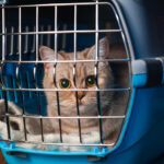How to travel with a cat (domestic and abroad)