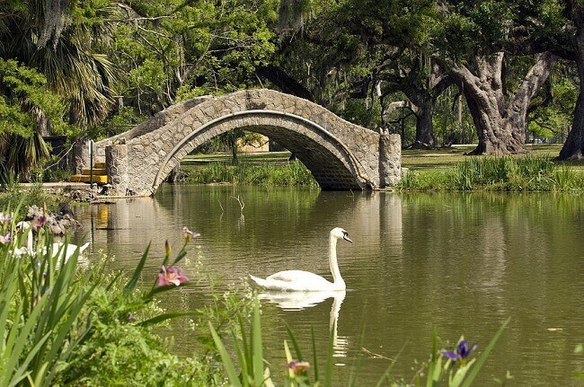 Swan on a lake at New Orleans City Park