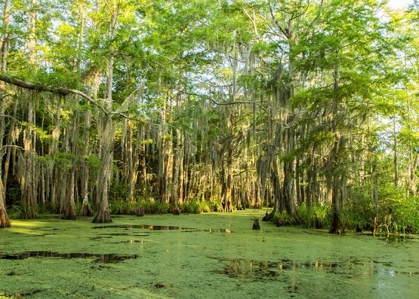 Honey Island Swamp, one of the best day trips from New Orleans