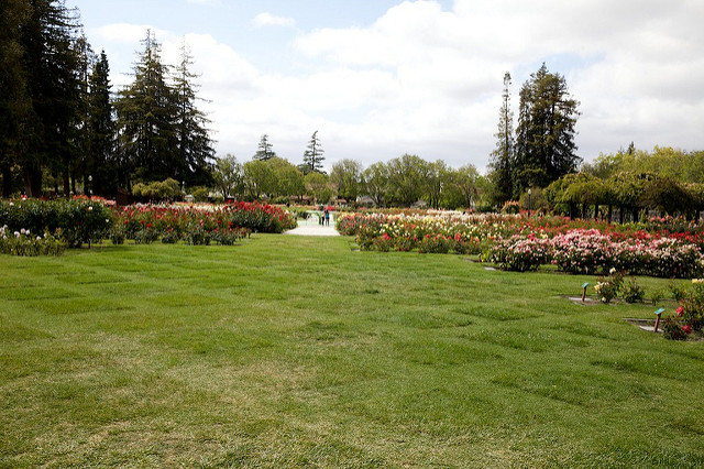 The Municipal Rose Garden