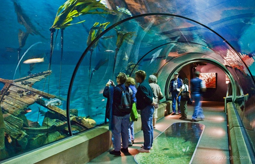Open sea exhibit
